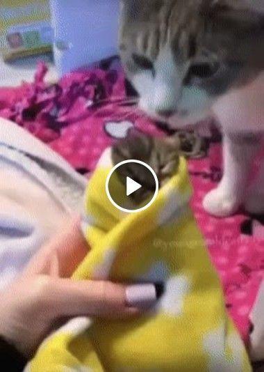 Olha que lindo a gatinha cuidando do filho