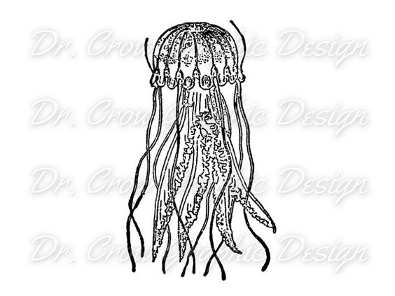 #Vintage #Jellyfish #Graphic Ocean #Clip #Art