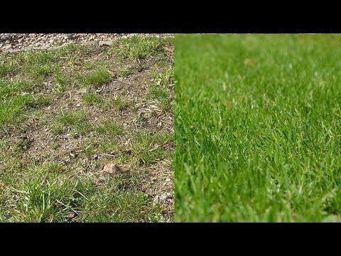 Rasen Neu Anlegen Ohne Umgraben Anleitung Tipps Alten Rasen Neu Machen Erneuern Youtube Rasen Anlegen Garten Neu Anlegen Rasen Erneuern
