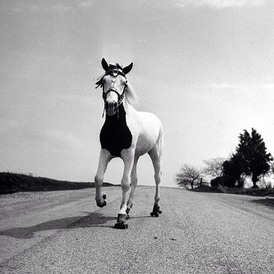 Jimmy, the roller-skating horse, Ohio, 1952. (Joe Scherschel—The LIFE Picture Collection/Getty Images) #wildLIFEwednesday