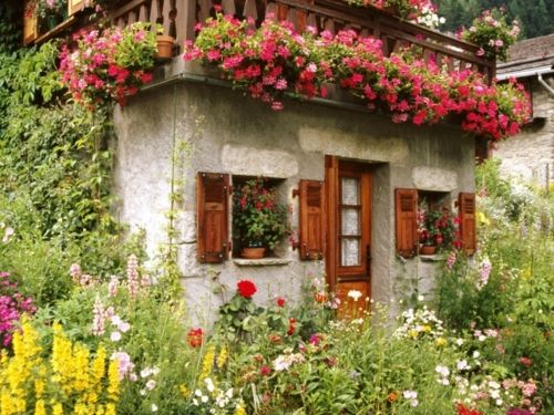 flores, flores, flores...: Beautiful Flower, Tiny House, Small House, Flowers Garden