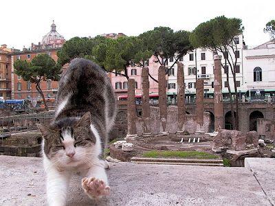 A Cat in Every Place: I gatti di Roma.: