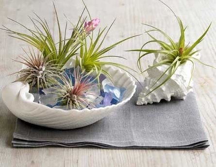 Perk up the indoors with air plants air plant design for Indoor gardening glasses