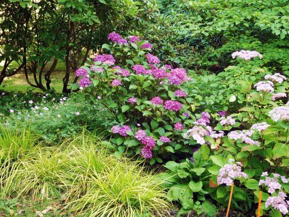 hortensia jardin gite coffe