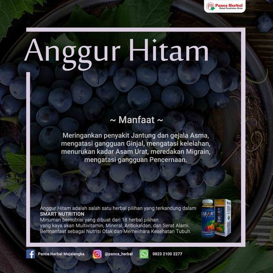 Manfaat Buah Anggur Hitam Untuk Kesehatan