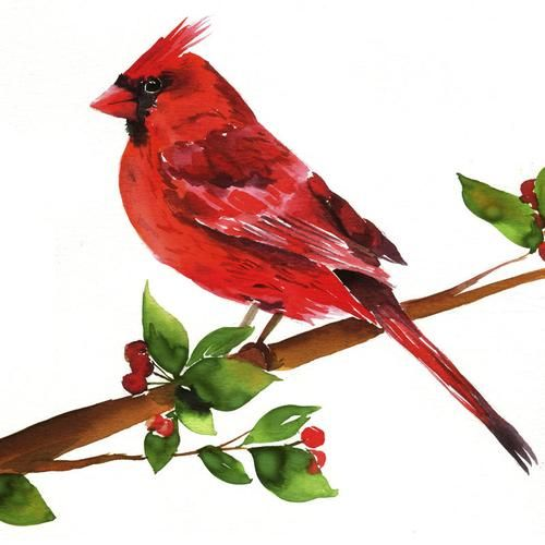 Cardinal Watercolor Kit Watercolor Art Bird Painting Acrylic