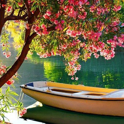 Lets pack a picnic basket. Perfect, pretty yellow rowboat under a blossoming tree by a lazy river.