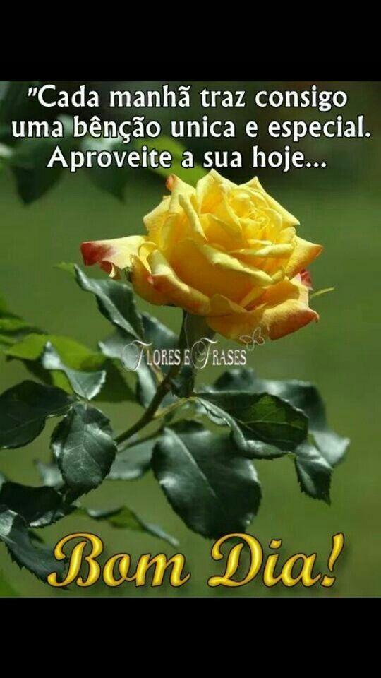 Um Bom Dia exala o perfume das rosas .