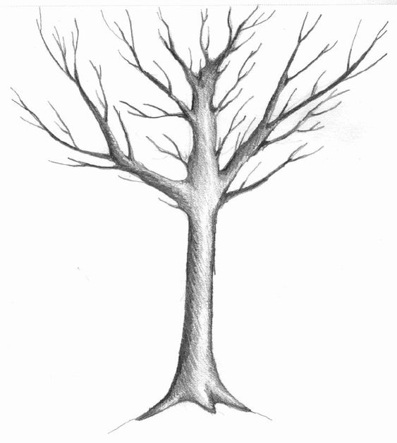 SIMPLE SKETCHES Sketch Of A Winter Tree By Judith M Feingold ARTTECHNIQUES Pinterest