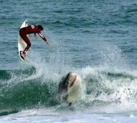 Funny Pictures Captured At Perfect Time