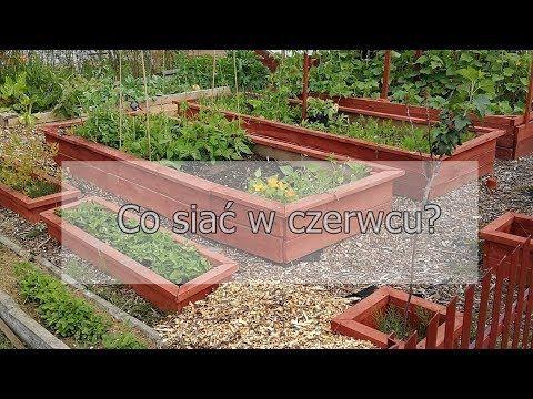 Co Siac W Czerwcu Ogrod Warzywny W Skrzyniach Ogrod Warzywny Permakultura Ogrod Warzywny Plan Youtube In 2021 Outdoor Decor Outdoor Structures Garden Bridge