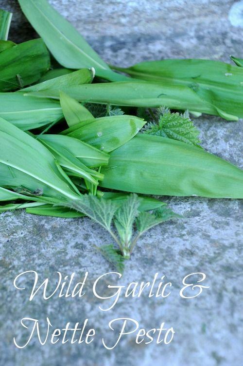 Wild Garlic and Nettle Pesto. Foraging. Wild food.
