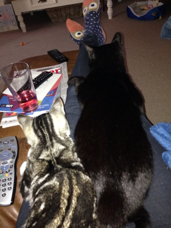 Cats watching telly