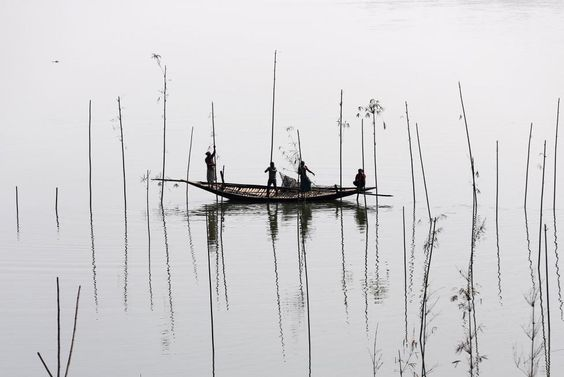 Fishermen place bamboo, where they will later place tree branches and fish food, to catch fish in a river in Dhaka, Bangladesh November 28, 2016. REUTERS/Mohammad Ponir Hossain