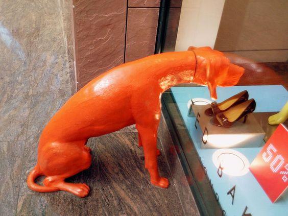 Orange dog by Arabian Eagle dog clothes www.romyandjacob.com