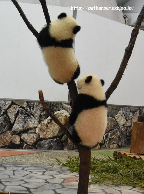 https://flic.kr/p/wubfLa | Ouhin and Touhin | at Adventure world, Wakayama, Japan