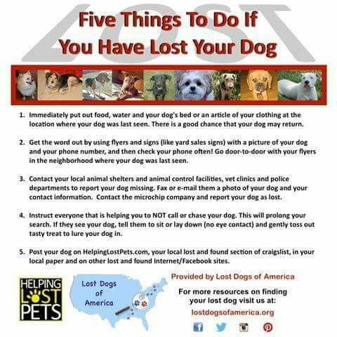 Pin By Karen Holmes On Dog Stuff Losing A Dog Losing A Pet Dogs
