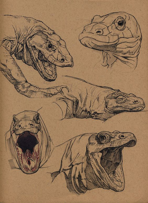 Komodo dragon, Floris van der Peet on ArtStation at https://www.artstation.com/artwork/komodo-dragon