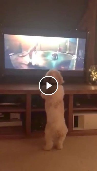 cachorrinho feliz assistindo e dançando