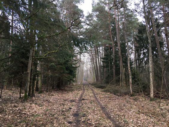 Дорога в лес. Фото Vladimir Shveda