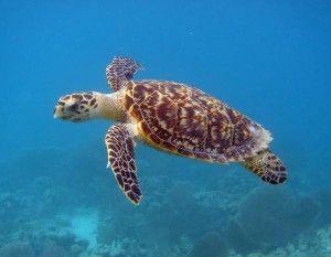 I LOVE turtles:)