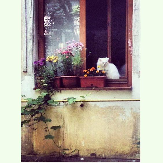 #summer_cat