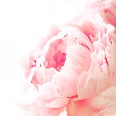 i heart you    #peonies #peony #flowers #cutflowers #bouquet #iheart ##flora #nature #living