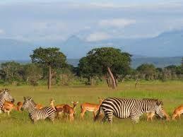 tayari blog: Mikumi & Udzungwa Mountains