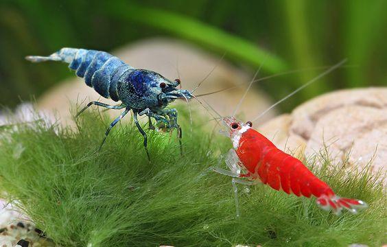 Shrimp, Tanks and Guys on Pinterest