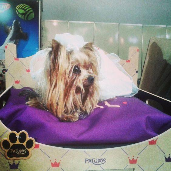 Olha a caminha de princesa #pet #patudos #cachorro #dog #yorkshire