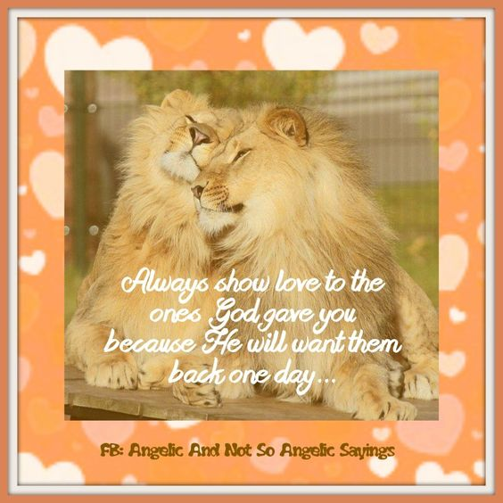 #love  Visit us on Facebook.... https://www.facebook.com/Angelicandnotsoangelicsayings