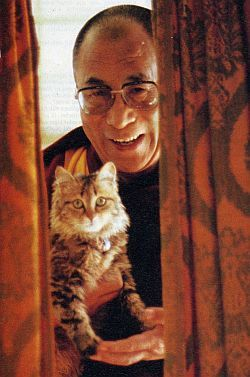How much virtue would you have to accrue, to be reincarnated as the Dalai Lama's cat? [I love how thoughtfully he provides support for her paws.]: