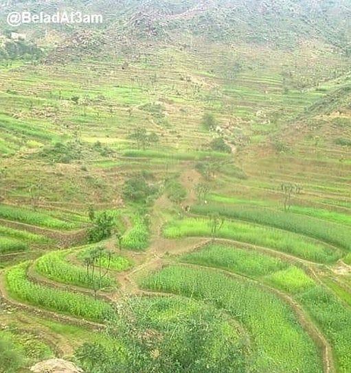 الصورة عليا والتعليق منكم اين تقع هذه المنطقة مناظر من بلاد الطعام اليمن ريمة انت لا تعرف اليمن Yemen Beladat3am Outdoor Farmland Vineyard