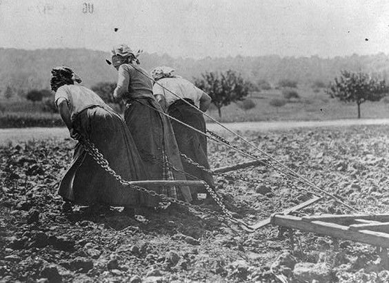French Peasants Plowing Field Somme France 1917 8x10 World War I WW1 Photo