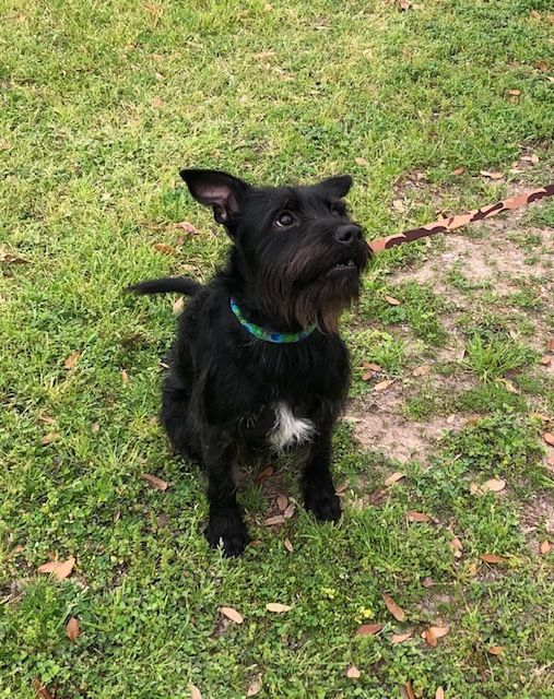Adopt Mikey On Dog Adoption Animal Rescue Animal Shelter