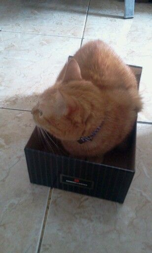 Milson na caixa