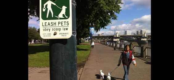 Portland is a dog-friendly town. 33 off-leash areas (not every park is, so please check before you take Fido off his leash). Many hotels accept dogs (just ask) and if you'd like to get a brew while hanging out with your dog, go to Lucky Labrador Brewing Company.