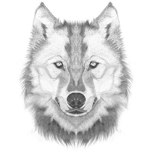 How To Draw A Wolf Head / Step By Step Lesson - Click Pic For Video! | How To Draw | Pinterest ...