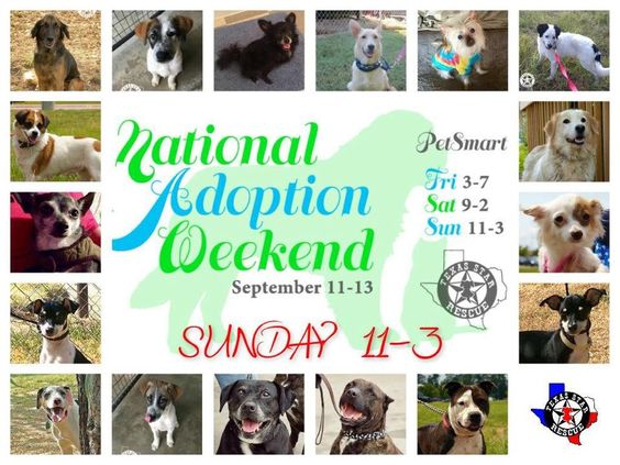 NATIONAL ADOPTION WEEKEND PETSMART LONGVIEW,TX SEPTEMBER 13 SUNDAY 10-3 PLEASE SHARE!!!  Come see us today at PetSmart and adopt your new best friend from Texas Star Rescue in Longview, Texas!!!! #TSRadopt #woof #helpsavealife #purr #dog #rescuedismyfavoritebreed #cat #texasstarrescue #adoptdontshop #puppies #kitties #meow #petsmart #chichi #pitbull #lab #terrier #GSD #shihtzu #basset #ratterrier #bostonterrier #bordercollie #schnauzer #nationaladoptionweekend #gotchaday