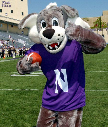Willie The Wildcat, Northwestern Wildcats Mascot, As He
