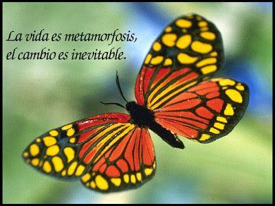 Como Mariposas F635667118d1d4a127290d52870124e9