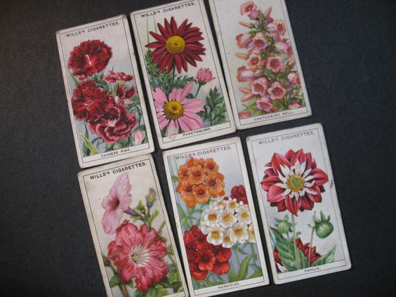 Old Wills's GARDEN FLOWERS - Cigarette Card Vintage Advertising Wills Trade Cards 1933  W2 by ValueARTifacts on Etsy https://www.etsy.com/listing/233517857/old-willss-garden-flowers-cigarette-card