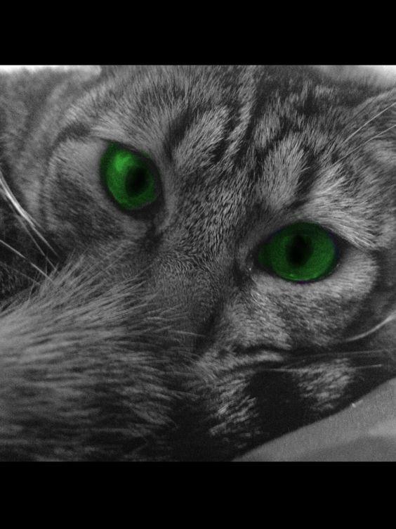 Miau, miau!