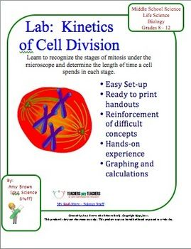 Biology Lab: Kinetics Of Cell Division (mitosis).  In this lab, students will observe prepared slides of whitefish and onion mitosis. After becoming familiar with the cells on the slide, students will conduct a random sample of cells to determine how much time, in minutes, is spent in each stage of mitosis.  $