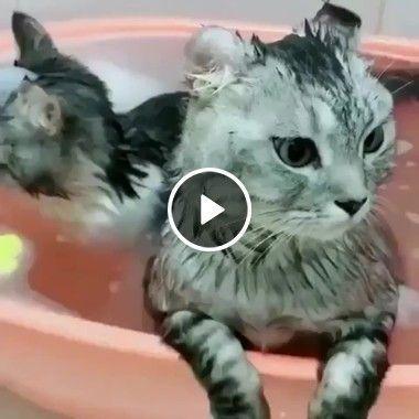 Mamãe e filhotinho na banheira curtindo.