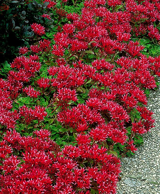 Trees And Shrubs Beautiful And Border Plants On Pinterest