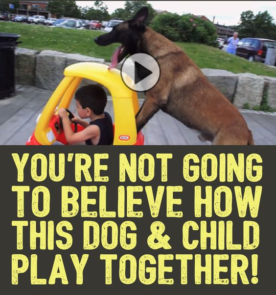 You Re Amazing Dog: You're Not Going To Believe How This Dog & Child Play