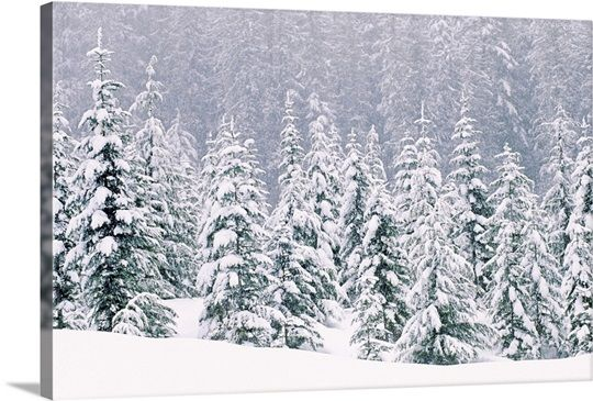 Snow Covered Pine Trees Tree Wall Art Tree Canvas Painting Snow