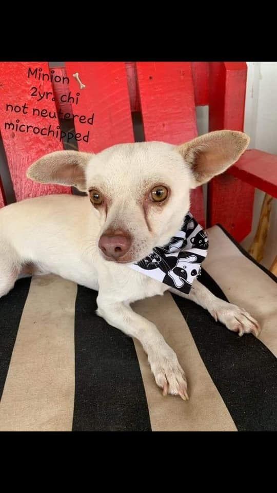 Adopt Minion On Pet Adoption Adoption Dogs