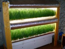 Бизнес идея: Выращивание зеленого лука у себя дома / Понимание бизнеса